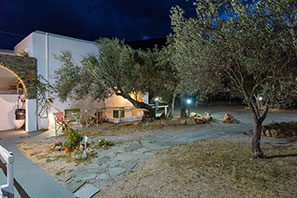 The yard with olive trees at night